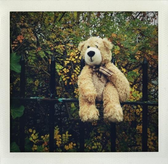 A Teddy on a school fence around Birkbek